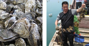 Oysters harvested in Fuzhou, China (Photos by Dustan Hoffman / Crown Prince)